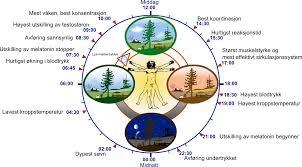 Hoe werkt het circadiaans ritme op Coaching Vitaal